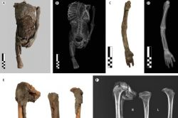 Artículo: Mummified proportionate dwarfs from the Valley of the Kings